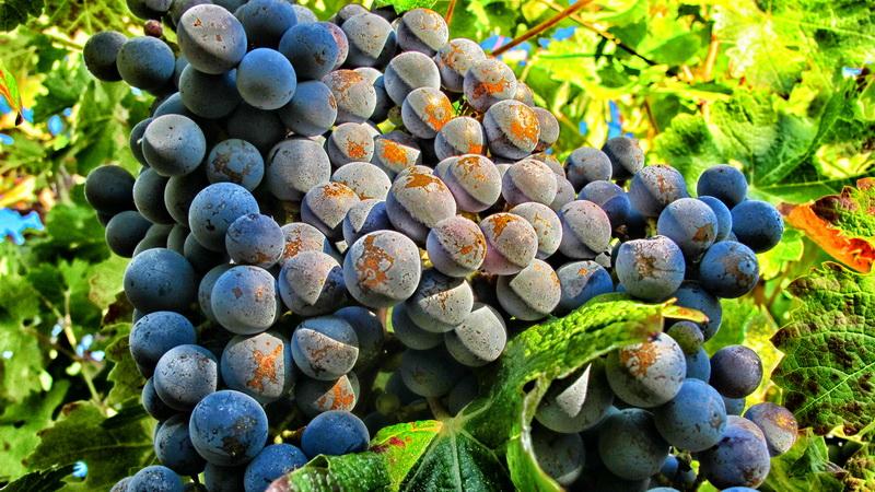 domaine-viticulture-diapo1