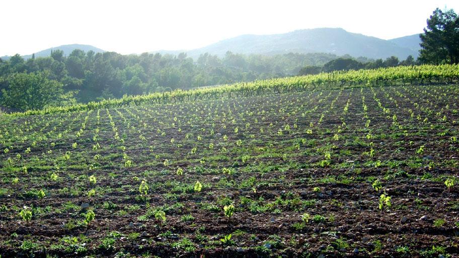 domaine-viticulture-diapo4