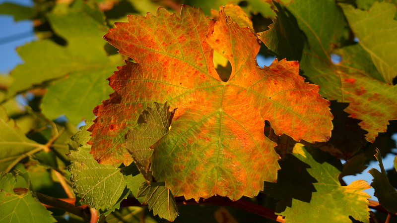domaine-viticulture-diapo6