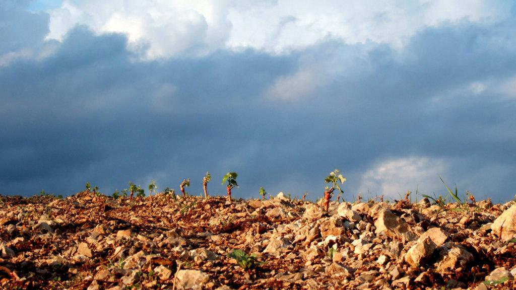 domaine-viticulture-diapo2